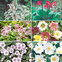 Perennial Plants - Shade Collection