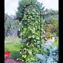 Runner Bean Tower