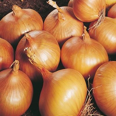 Autumn Planting Onions