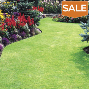 View our Lawn Care