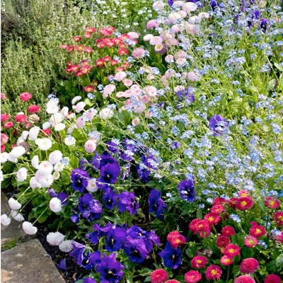 Save 72% on Mixed Spring Bedding