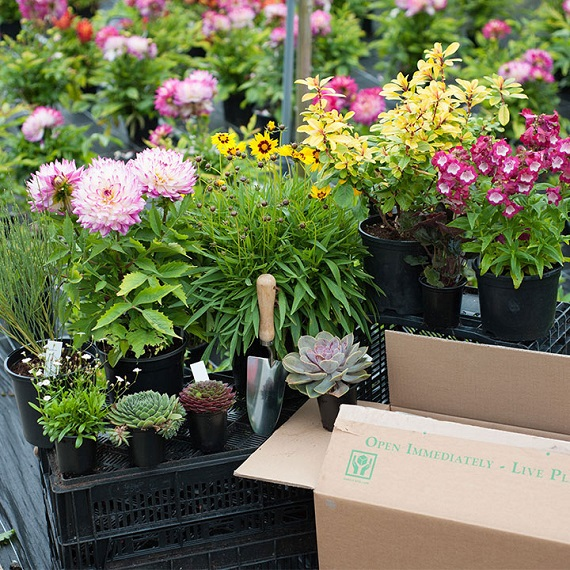 View our Plant Mystery Parcel