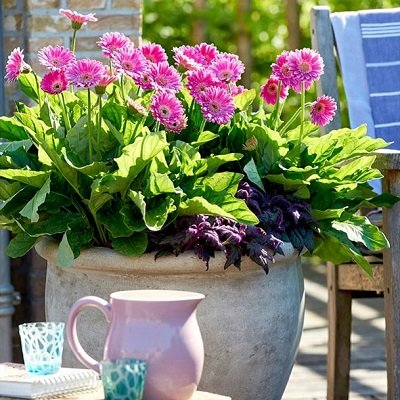View our Amazing range of 2 litre potted Perennials