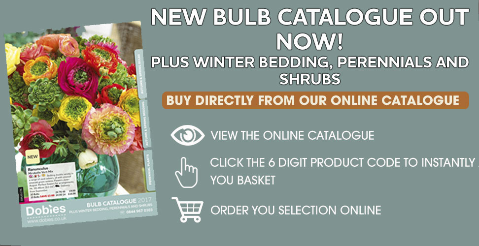 View our NEW Online Bulb Catalogue