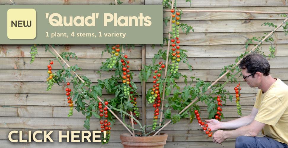 Quad Plants