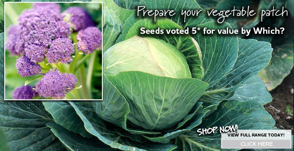veg seed sow february