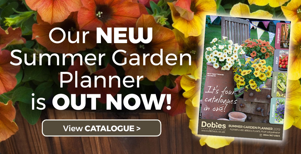 Summer Planner Catalogue