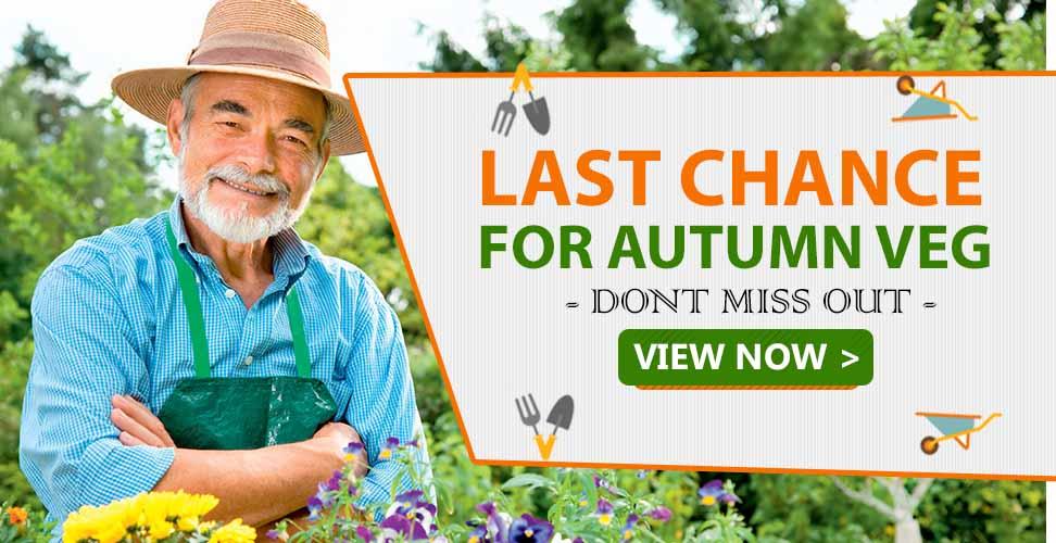 autumn veg collection
