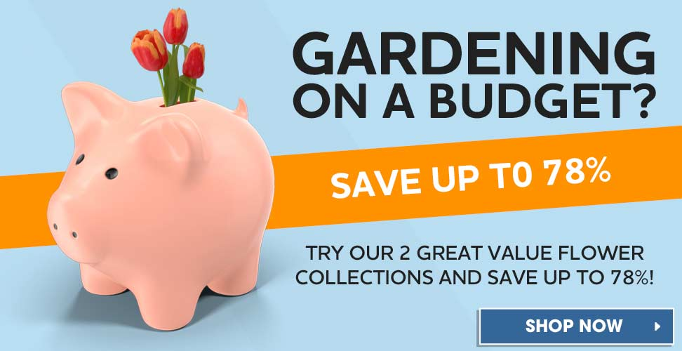 Save up to 78% with our amazing flower collections