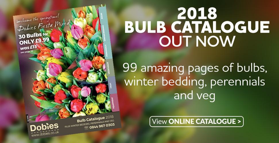 New 2018 Bulb Catalogue