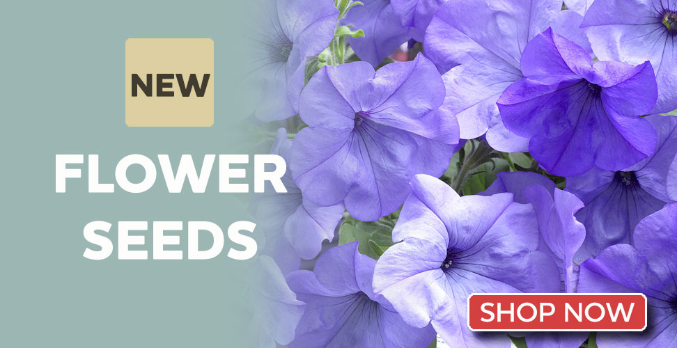 View our Amazing New Flower Seeds