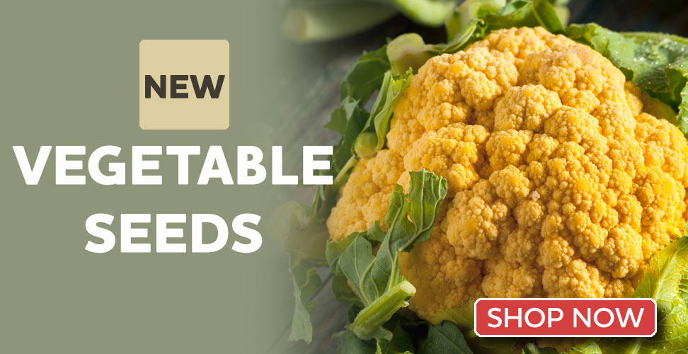 View our Amazing New Vegetable Seeds