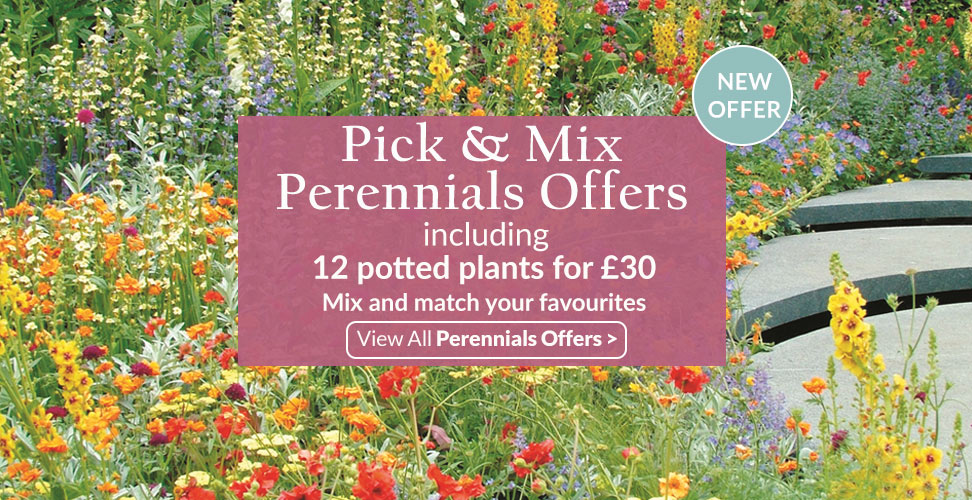 View our Pick and mix offer on our Perennial Plants
