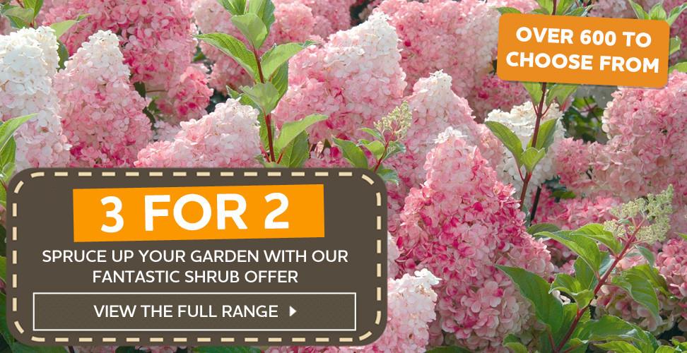 3 for 2 shrubs