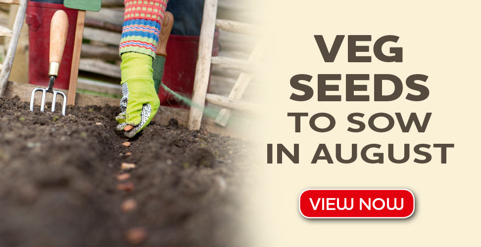 veg seeds to sow in august