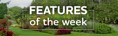 features of the week