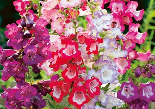Flowers to sow in September