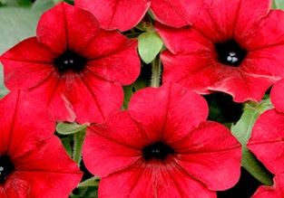 Flowers to sow in March