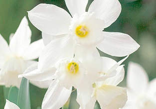 Flowers to sow in November