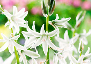 Flowers to Sow in October