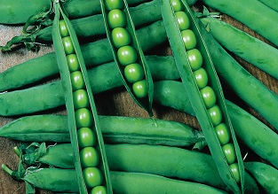 April vegetables to sow