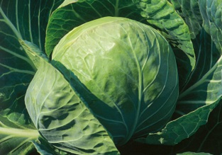 August vegetables to sow