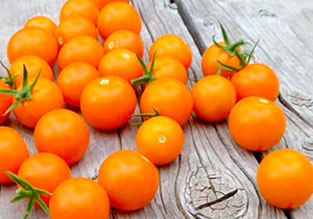Vegetables to Sow in January