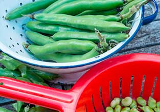 Vegetables to Sow in November