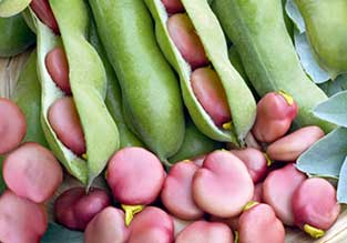 Vegetables to Sow in October