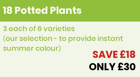 18 potted plants Offer