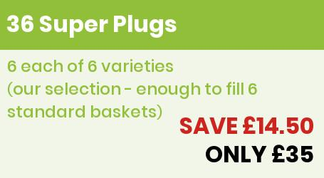 36 Super plugs Offer