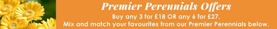 Premier perennial offer - any 3 for 18 or any 6 for 27