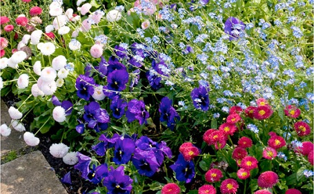 View Our Amazing Winter Bedding Plants - Collection