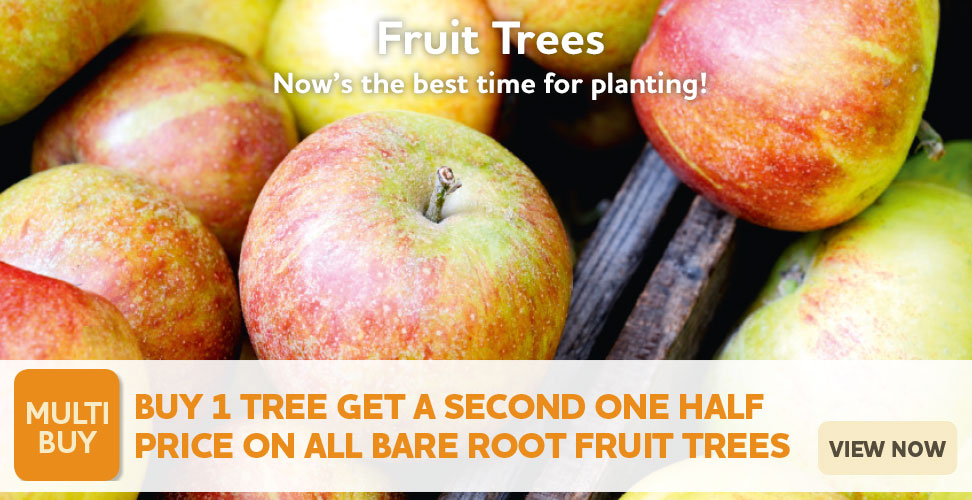 Buy One Get One Half Price Fruit Trees