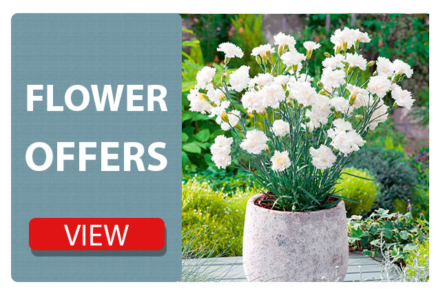 Flower Plants Offers