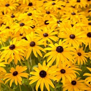 5 Litre Potted Perennials