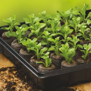 Sow and Grow  Peat Pellets - Save 20%