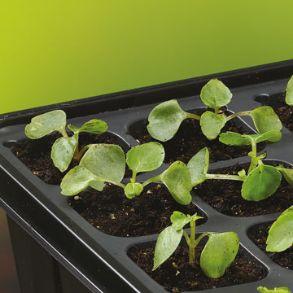 Sow and Grow Plug plant Starter Kit - Half Price