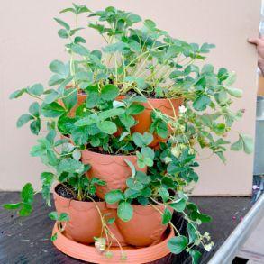 Triple Height Planter - Half Price