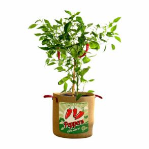 Vintage Peppers Grow Bags Save £5