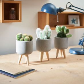 Easy Care Plants And Planters