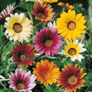 February Flowers to Plant