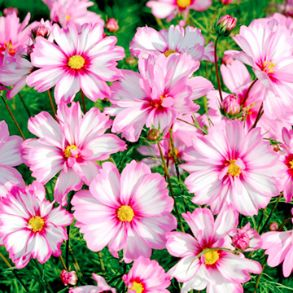 May Flowers to Plant