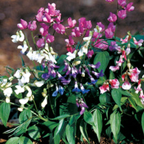 November Flowers to Plant