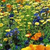 All Flower Plants