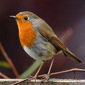 Encouraging Birds