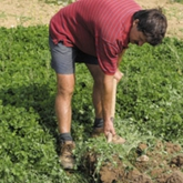 Why Grow Green Manure?