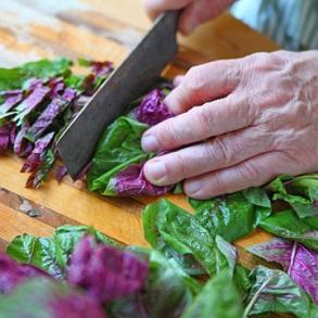 Leaf Salad Seeds