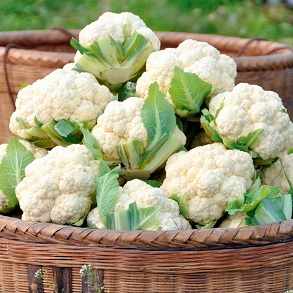 Brassica from just 22p per plant