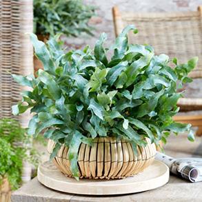 Fabulous Foliage for a Fiver!